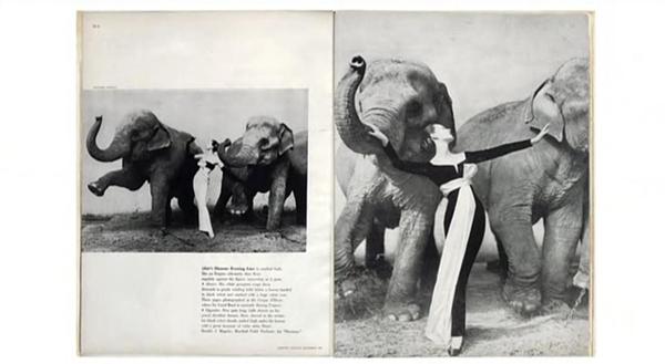 Dovima con elefantes
